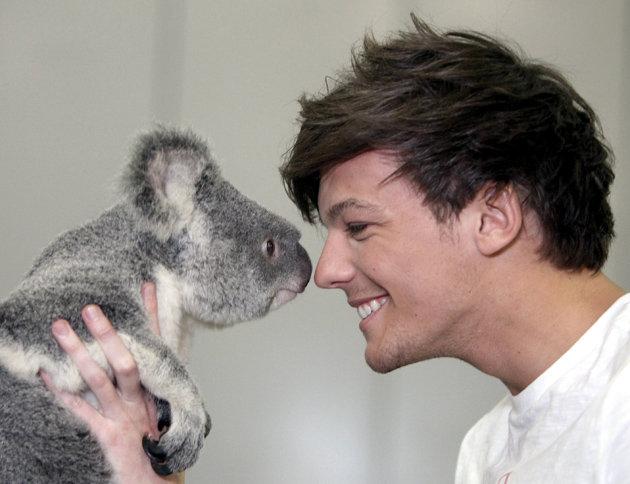 louis-tomlinson-koala- (1)